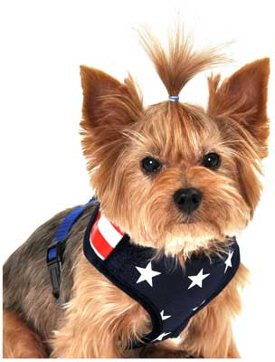 Anit Accessories America Flag Mesh Harness
