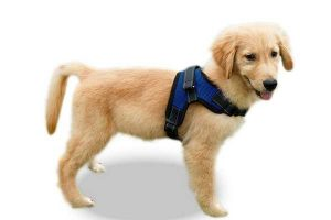 best dog harnesses reviews